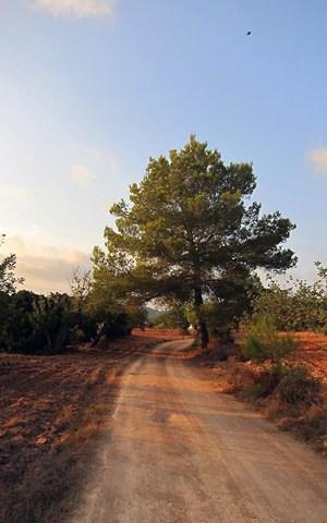 path dirt road